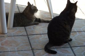 Mimine et Moumoune!