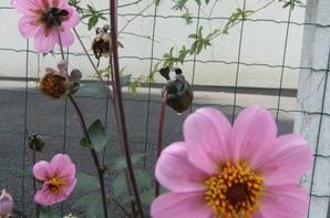 Fleurs du jardin!