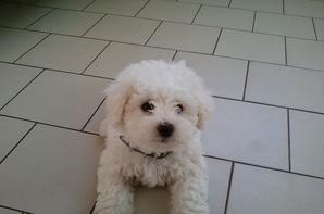 Montage de Mon chien Snoopy
