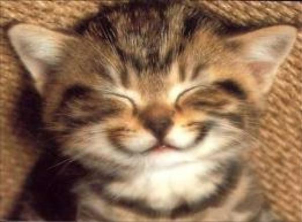 Quelle chat préféré vous?