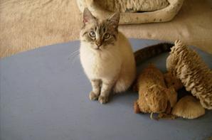 caprice, pinocchio et olympe