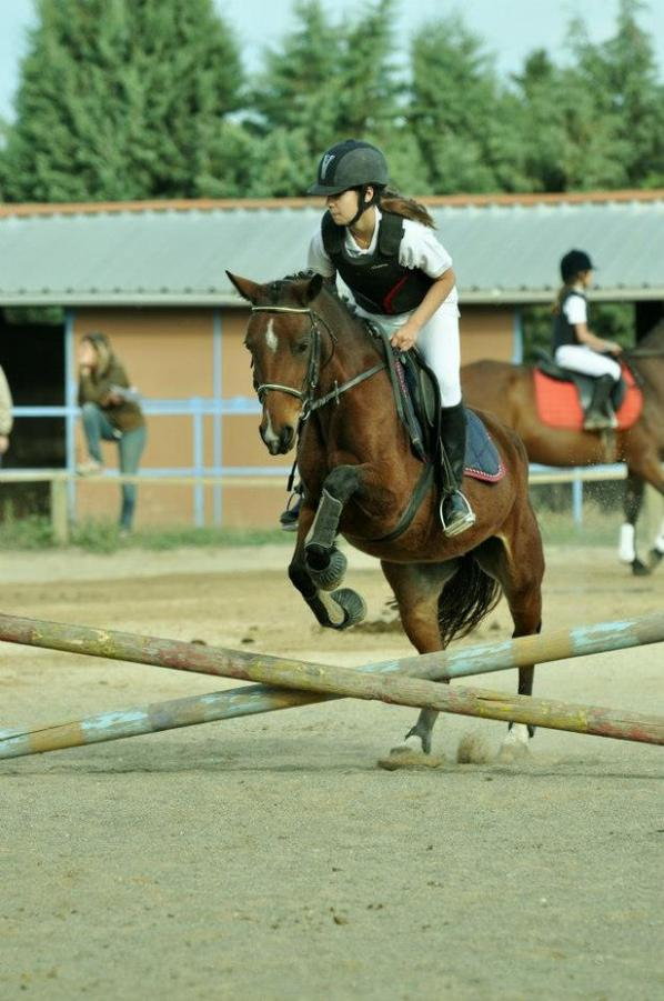 Concour saut d'obstacles le 14 octobre 2012