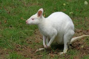 Animaux Albinos