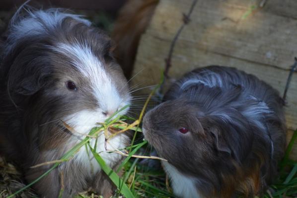 Die Schweinchen im Garten