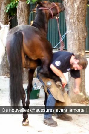 Lamotte Beuvron 2014