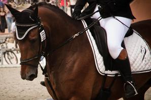 Championnat de France 2015 - Dressage (1)