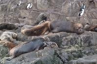 Nous profitons de nos derniers jours et prenons un bateau pour aller sur l'île  de beagles les  éléphants de mer y sont très nonbreux et impressionnant  par leurs taille .Des quantités d'oiseaux également nous sommes secoues car il fait mauvais et le froid est glacial.
