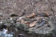 L'île de beagles