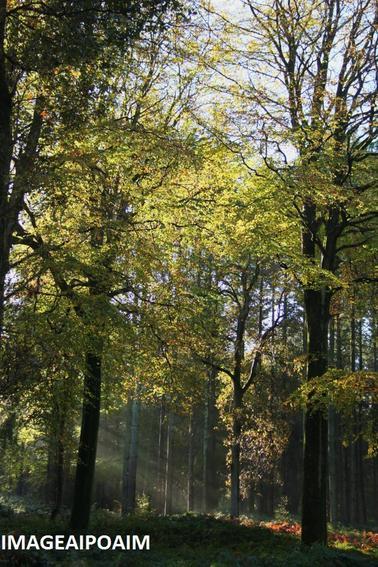 Bois et forêts d'automne ...