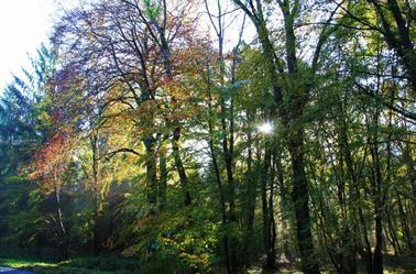 Soleil d'automne ...