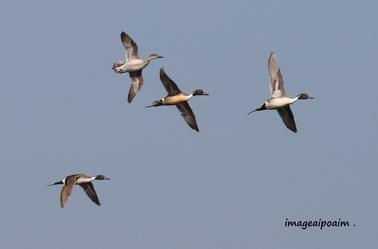 Oiseaux et compagnie ...