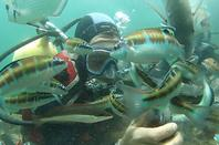 une agréable journée @ Monastir sous marine ;-) Enjoy