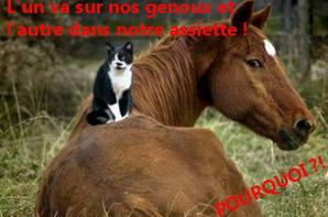 NON A L'HIPPOPHAGIE !!!!!!!!!!