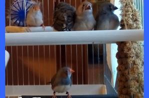 la petite famille reunie