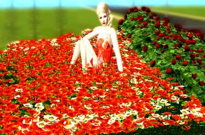 Vivez Sims - Les deux nouveaux modèles