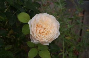 Fleurs {Photos personnelles}