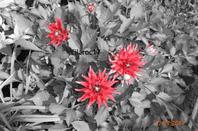 Fleur [Photos personnelles]