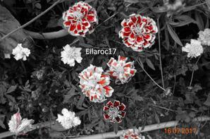 Fleurs [Photos personnelles]