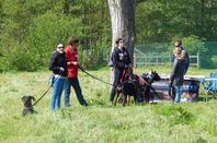Exposition canine au château de Bossuit