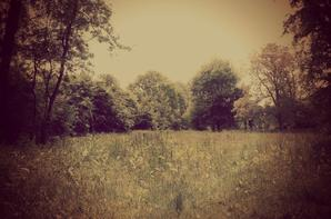 # Photographiiee #
