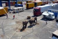 Cirque Pinder 2013 Boulogne sur Mer