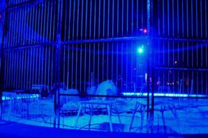 Cirque Pinder Paris 2013