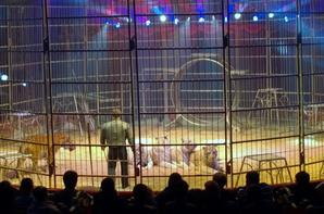 Cirque Amar 2014 Saint quentin Magistral