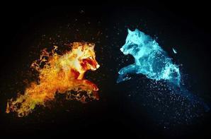 L'amour des loups