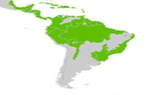 Les forêts d'Amérique du Sud :