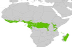 Les forêts tropicales d'Afrique