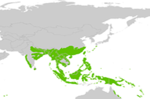les forets tropicales d'Asie