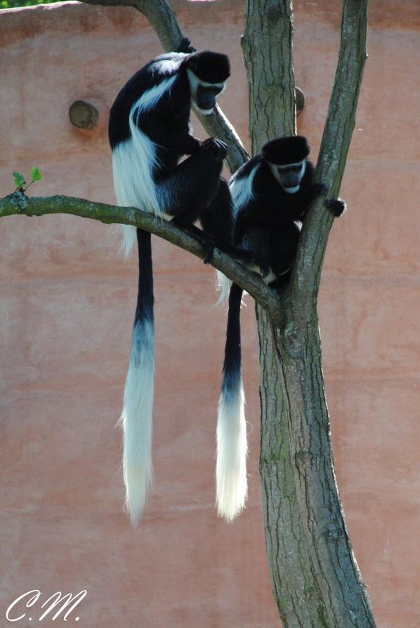 Pairi Daiza - Terre des origines - Autres animaux