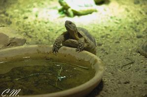 Pairi Daiza - La Lagune - Les reptiles du Mersus Emergo