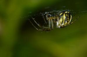 Insectes et araignée