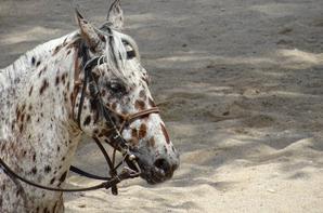 Les chevaux de OK Corral (2/9)