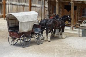 Les chevaux de OK Corral (3/9)