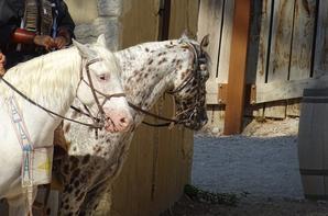Les chevaux de OK Corral (5/9)