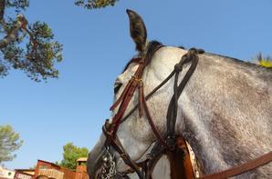 Les chevaux de OK Corral (7/9)