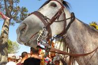 Les chevaux de OK Corral (8/9)