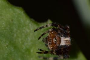 Une araignée qui me regarde droit dans les yeux