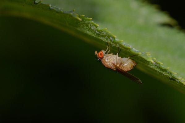 Des mouches en août 2016