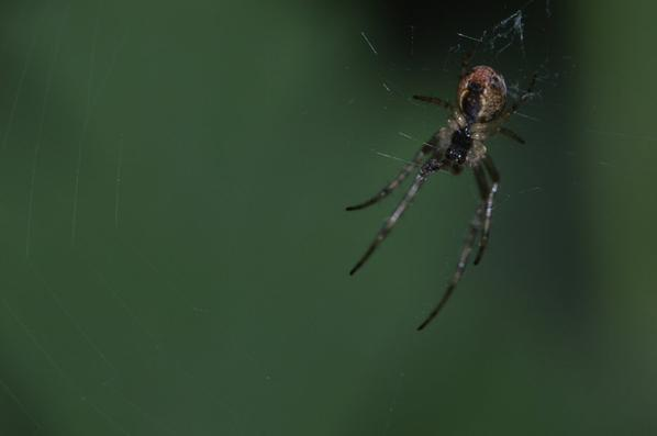 Quelques insectes et araignée fin 2016