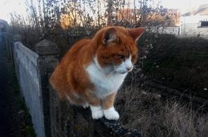 Un chat qui scrute sa proie