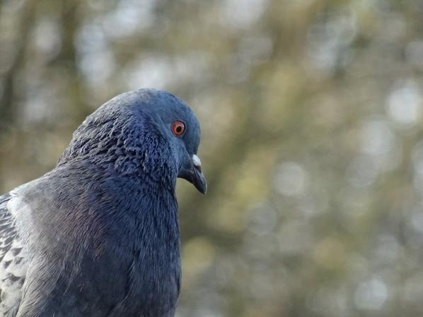 Quelques oiseaux (1/2)