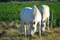 De magnifiques chevaux en photos (1/2)