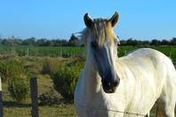 De magnifiques chevaux en photos (2/2)