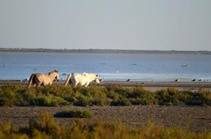 Des chevaux qui court près de Pallavas les Flots en photos (1/4)