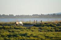 Des chevaux qui court près de Pallavas les Flots en photos (2/4)