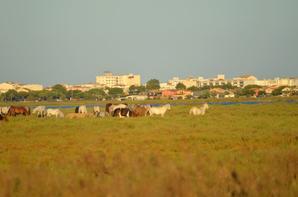 Des chevaux qui court près de Pallavas les Flots en photos (3/4)