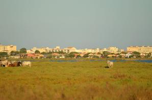 Des chevaux qui court près de Pallavas les Flots en photos (4/4)